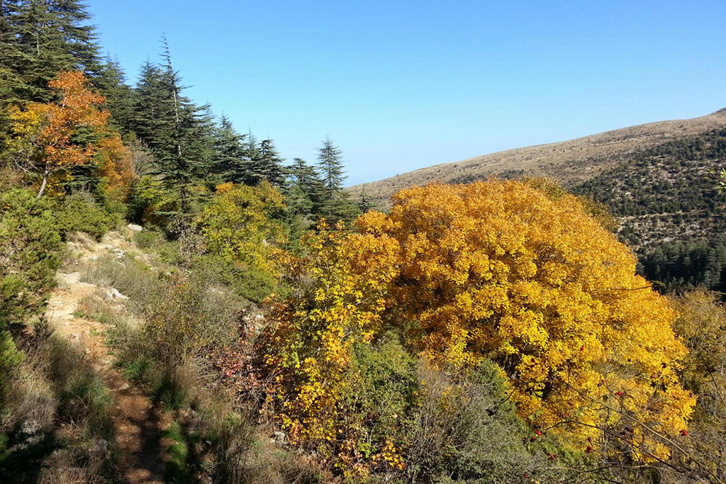 Liban Mountain Trek